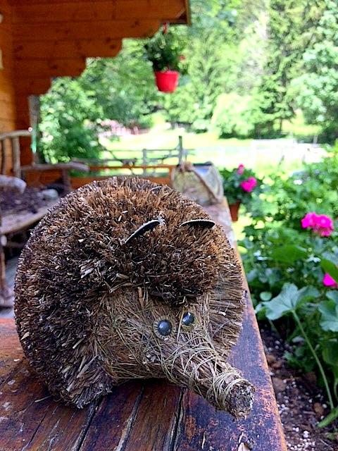 Natura Eco Camp Kranjska Gora hedgehog
