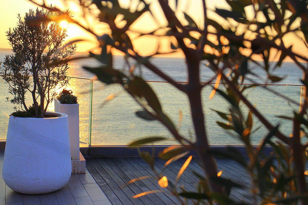 Hotel Piran terrace olive tree