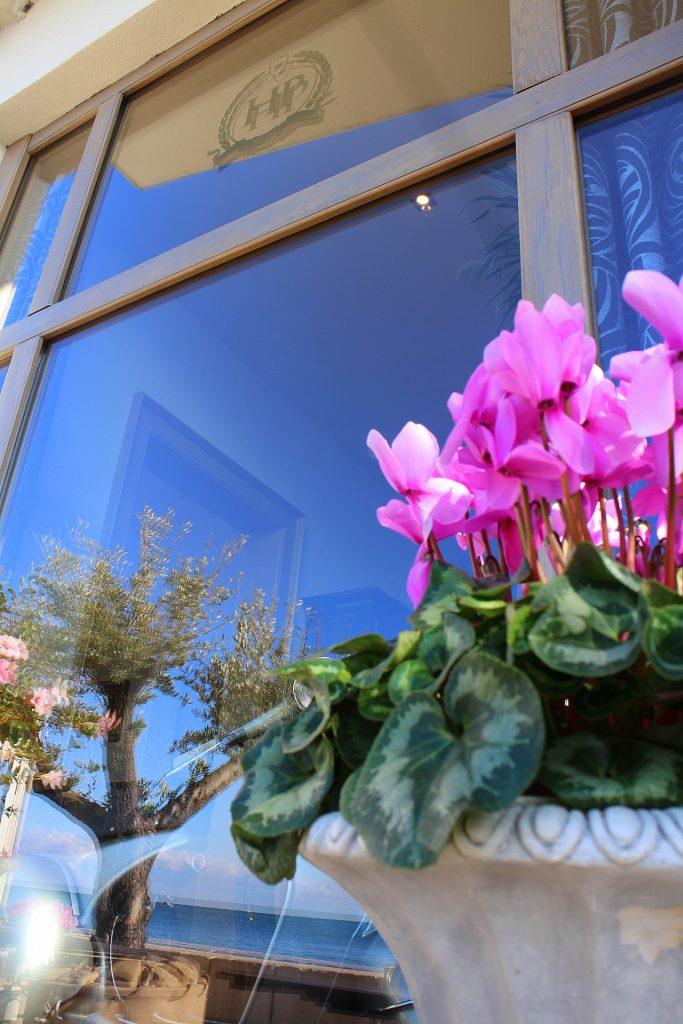 Hotel Piran purple flower