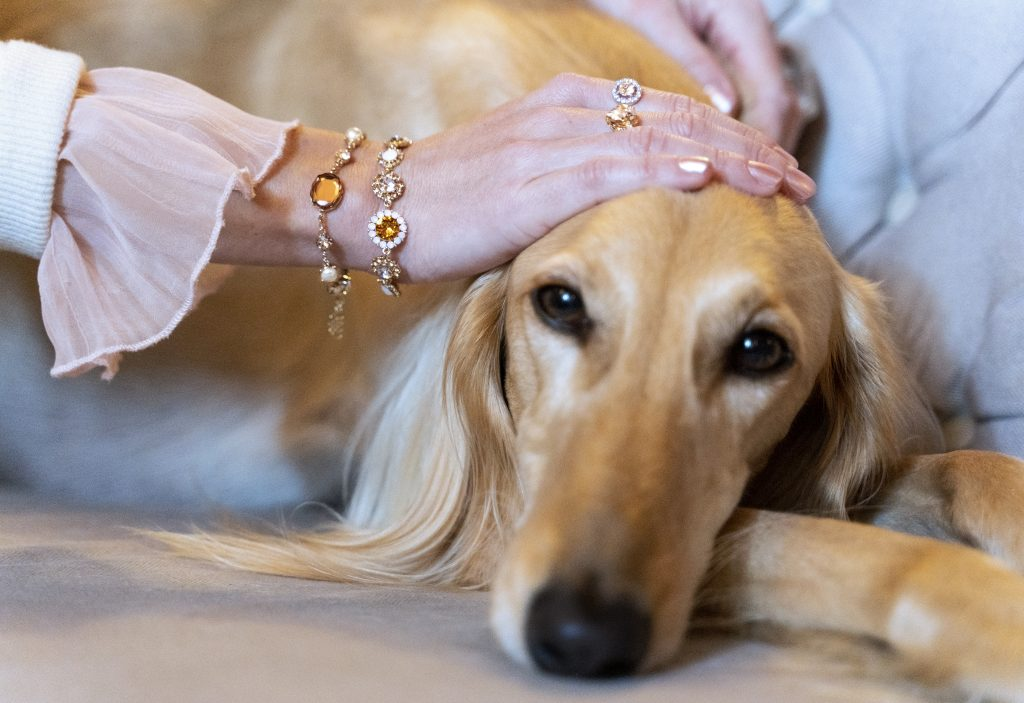 Lily and Rose Jewellery dog bracelet