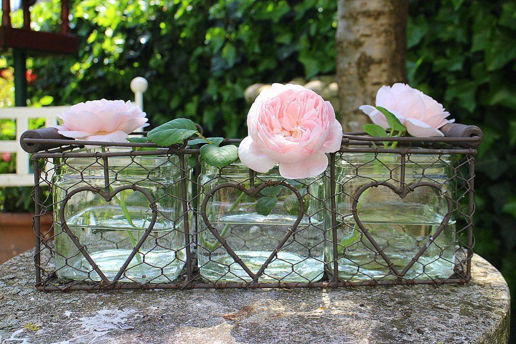 Pierre De Ronsard roses vase pink