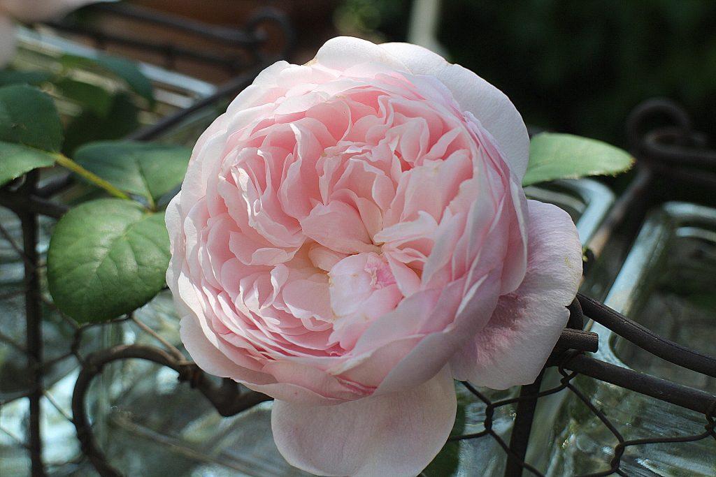 Pierre De Ronsard vase