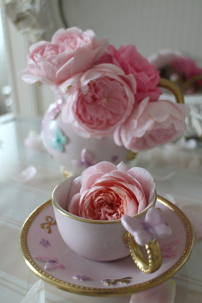 Villari rose blossom
